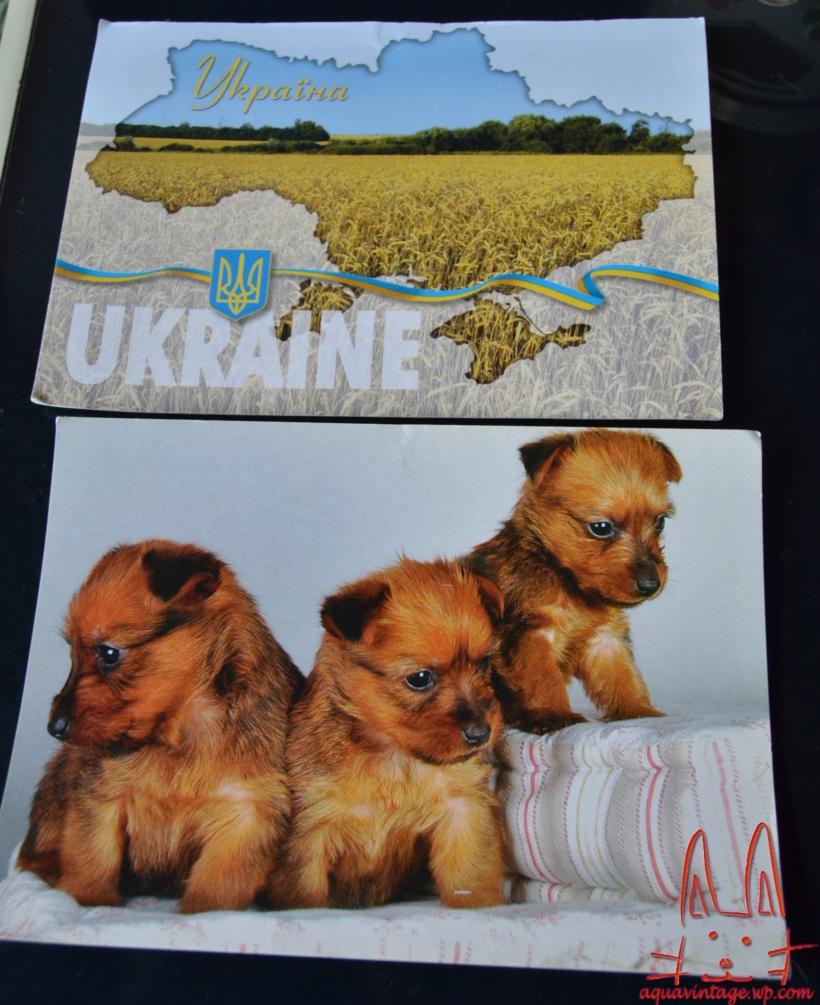 I'm in love with triplets pup and Ukraine's wheat field