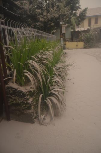 Tanaman rumah tetangga, perhatikan deh kontras warna abu dan hijaunya tanaman. Debu lumayan tebal..