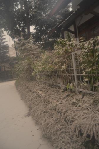 Tanaman shrubs depan rumah tertutup abu. Pretty Freaky